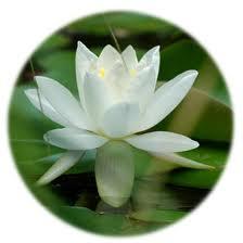 Fior di Loto - Centro Meditazione