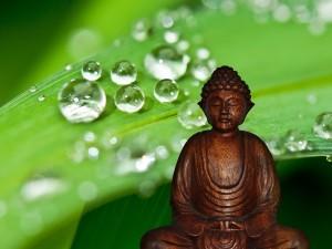 Meditazione -buddha goccie