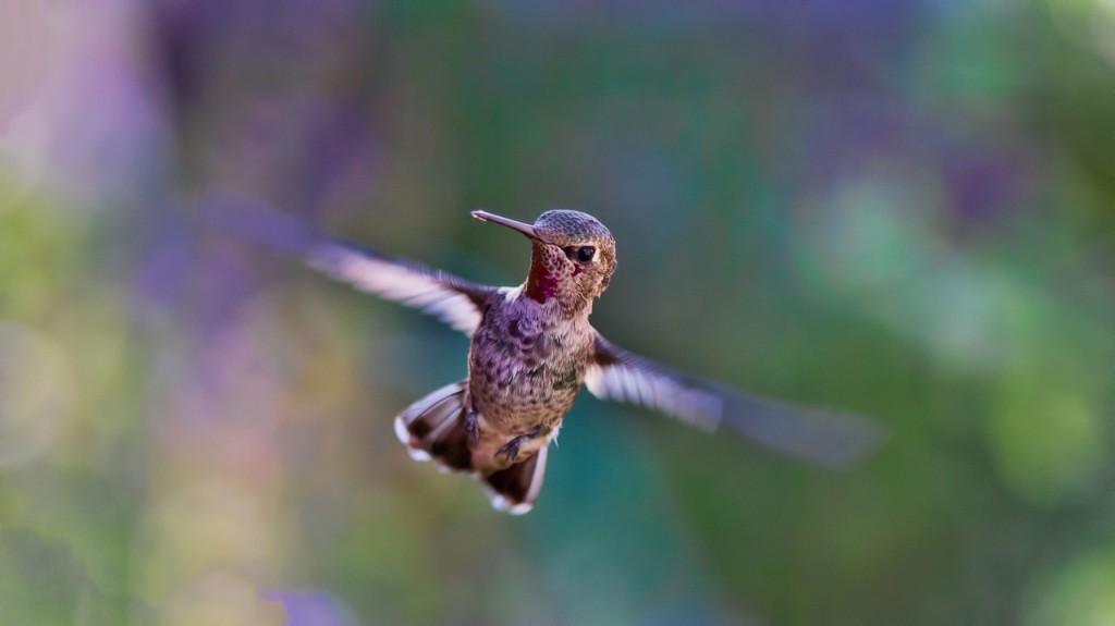 coraggio-colibri