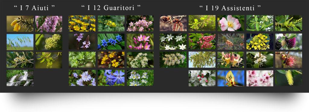 benessere coi fiori di bach al WWF