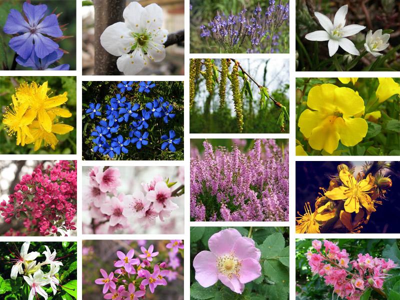fiori tutti